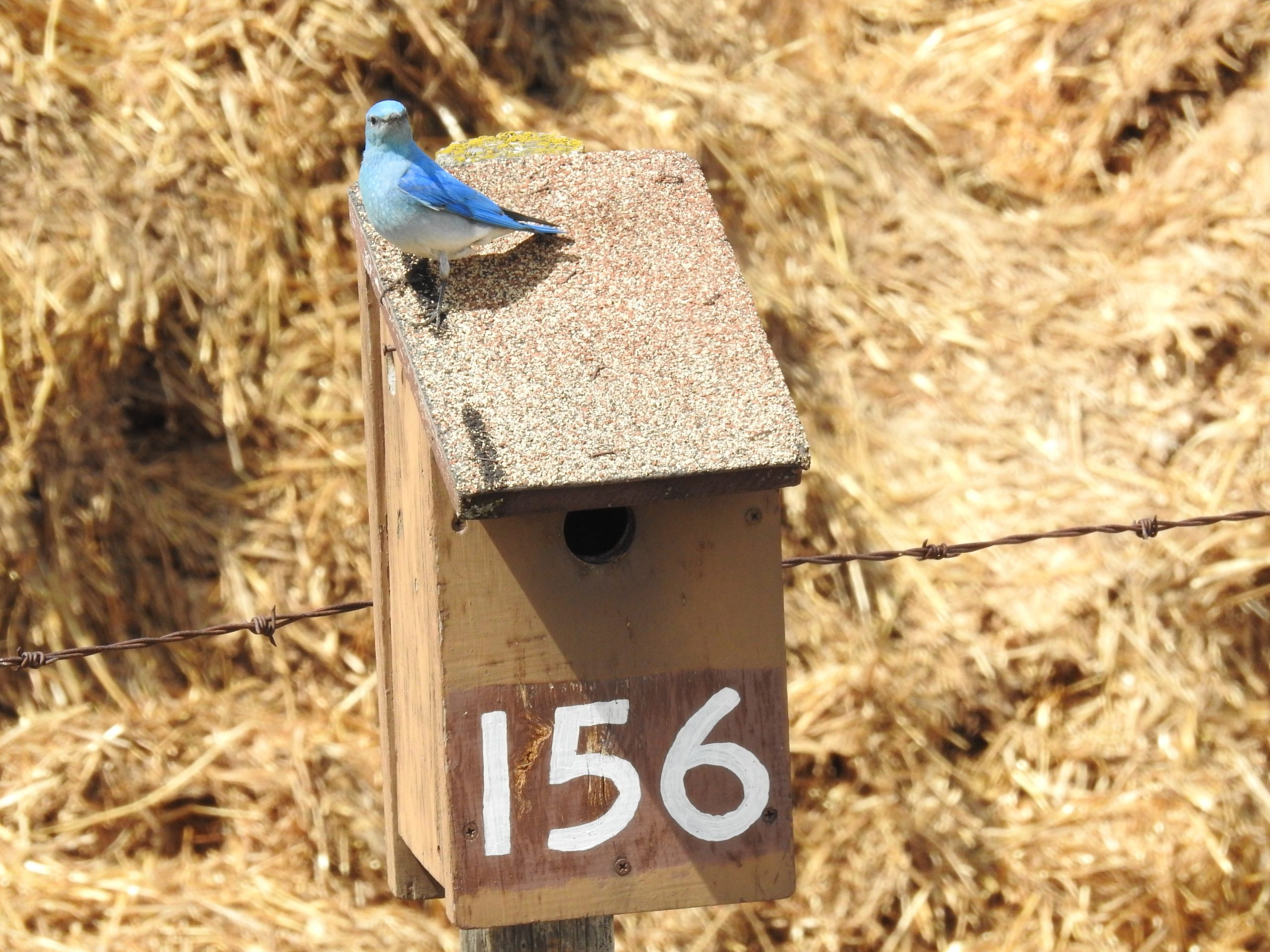 blue bird of a mailbox - Canadian Mortgage Pros