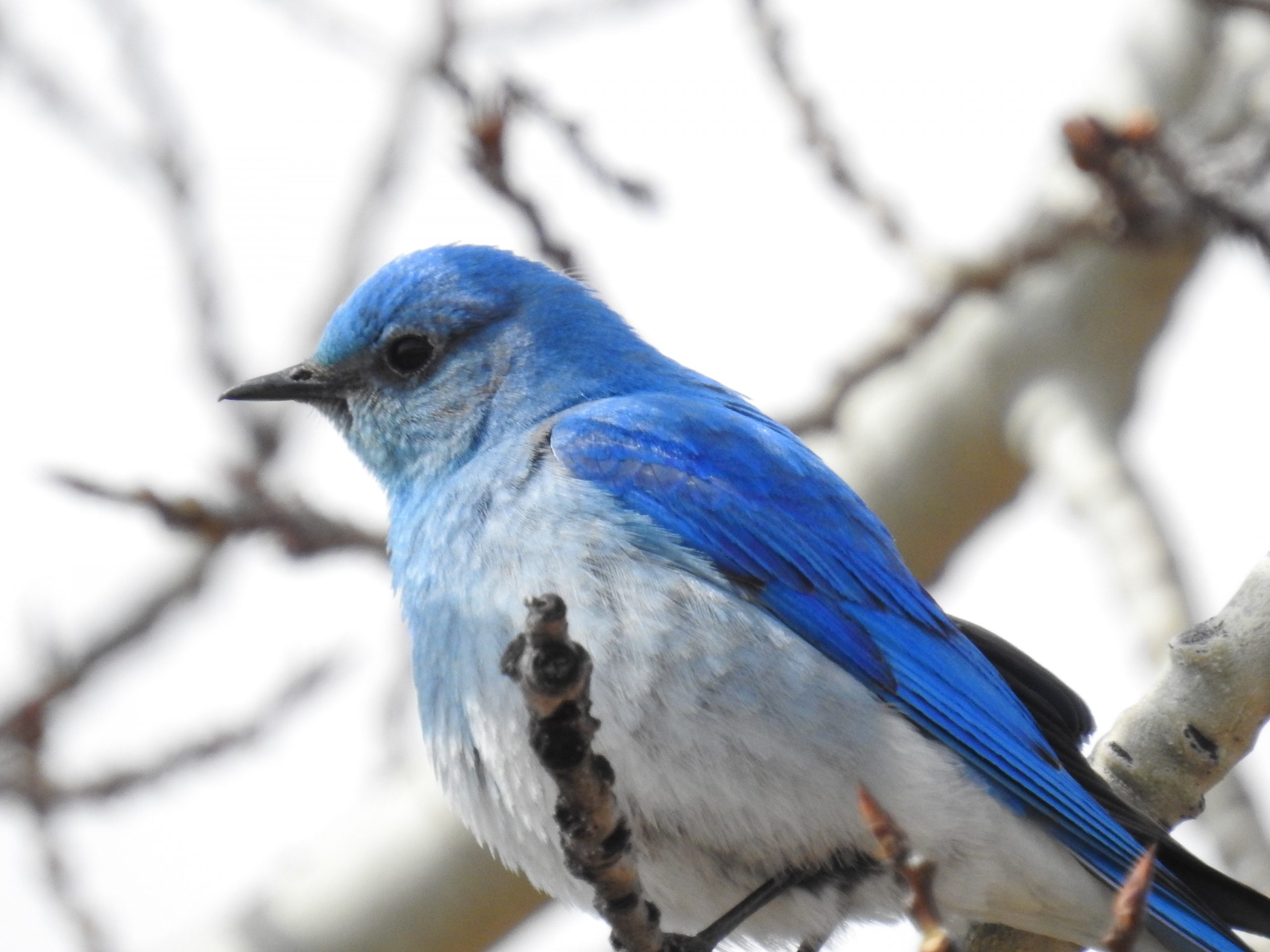 Blue bird on a branch - Canadian Mortgage Pros
